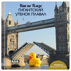 Как по Темзе гигантский утенок плавал