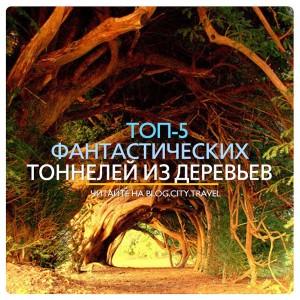 5 фантастических тоннелей из деревьев