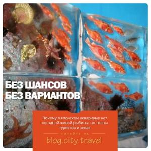 Почему в японском аквариуме нет ни одной живой рыбины