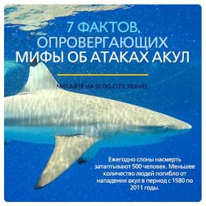 7 фактов, опровергающих мифы об атаках акул на людей