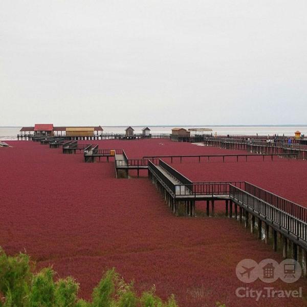 Panjin Red Beach: необычный красный пляж в Китае