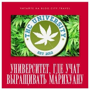 Университет, в котором учат выращивать марихуану