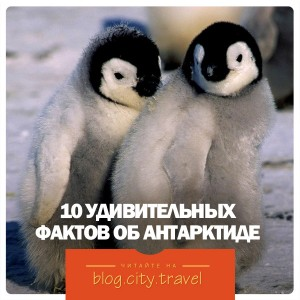 10 удивительных фактов об Антарктиде