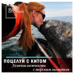 Место, где туристы могут поцеловаться с китом