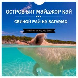 Свиной рай на Багамах