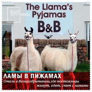 Ламы в пижамах: отель, где с пушистыми животными можно делать все, что угодно