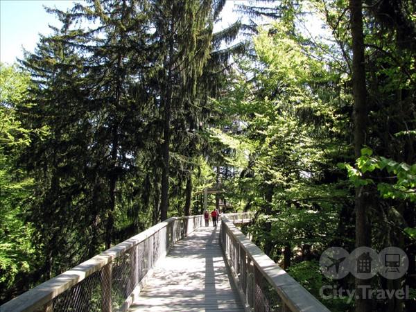 Дорога по верхушкам деревьев в Баварии