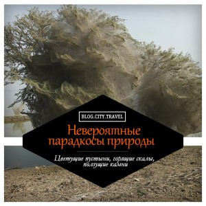 Парадоксы природы: цветущие пустыни, горящие скалы, ползущие камни