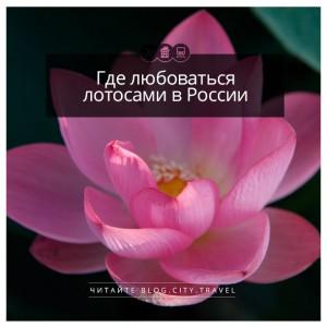 Где любоваться лотосами в России