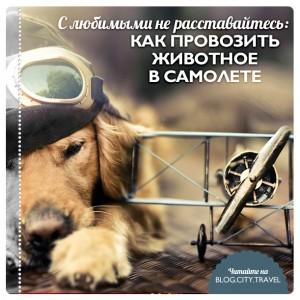 Как провозить животное в самолете