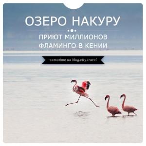 Озеро Накуру - приют миллионов фламинго в Кении