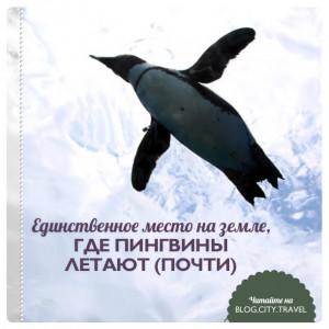 Единственное место на земле, где пингвины летают (почти)