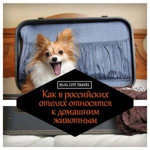 Как российские отели относятся к домашним животным