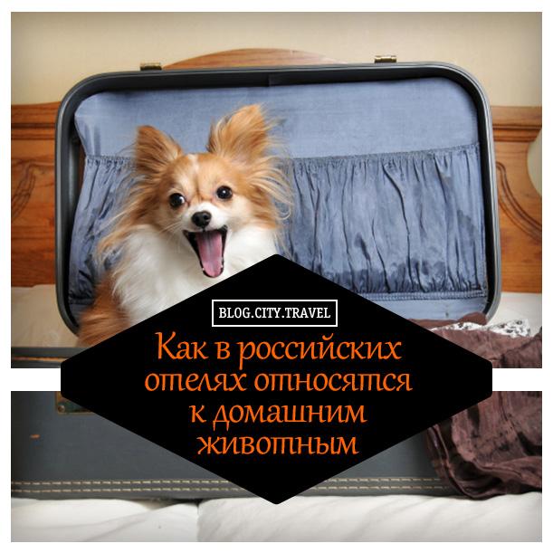 домашние-животные-в-отеле