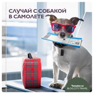 Случай с собакой в самолете