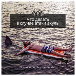 Что делать в случае атаки акулы