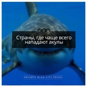Страны, где чаще всего нападают акулы
