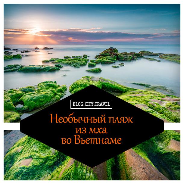 пляж-из-мха1