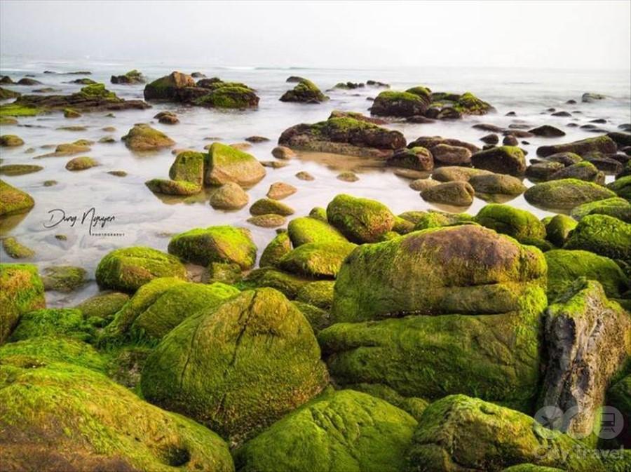 пляж из мха2
