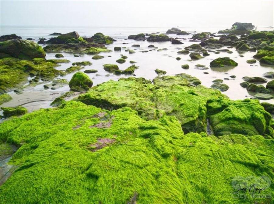 пляж из мха3