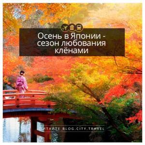 Осень в Японии - сезон любования клёнами!