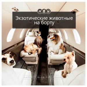 Утка, свинья, пони. Самые необычные пассажиры на борту самолёта