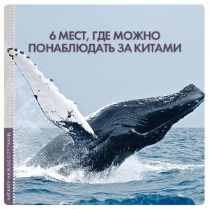 6 мест, где можно понаблюдать за китами