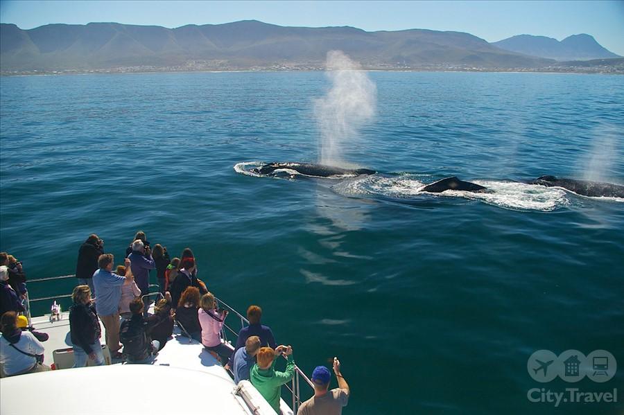 киты1