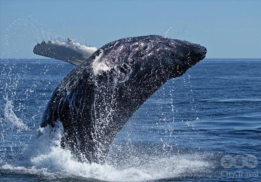 киты2