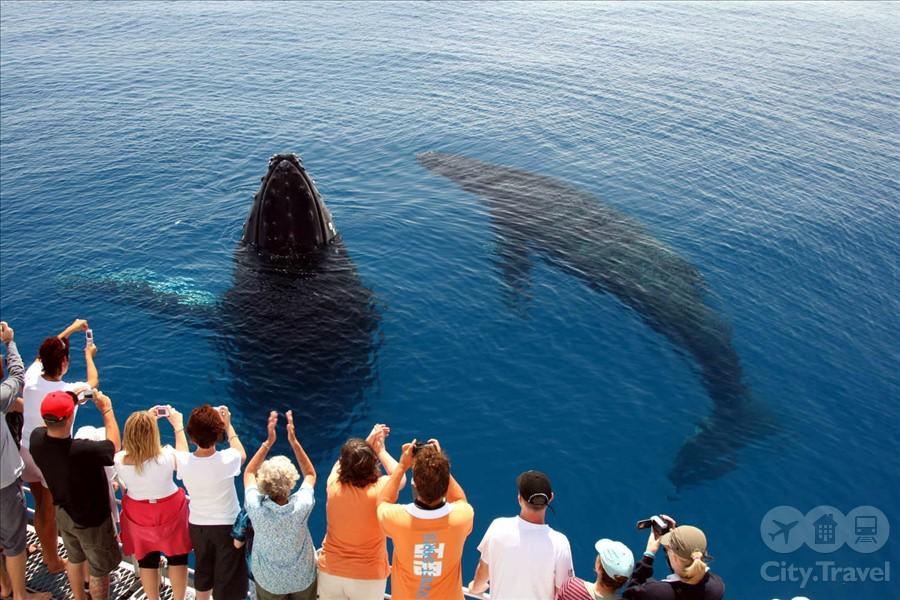 киты3
