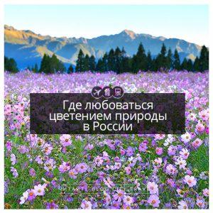 Где любоваться цветением природы в России